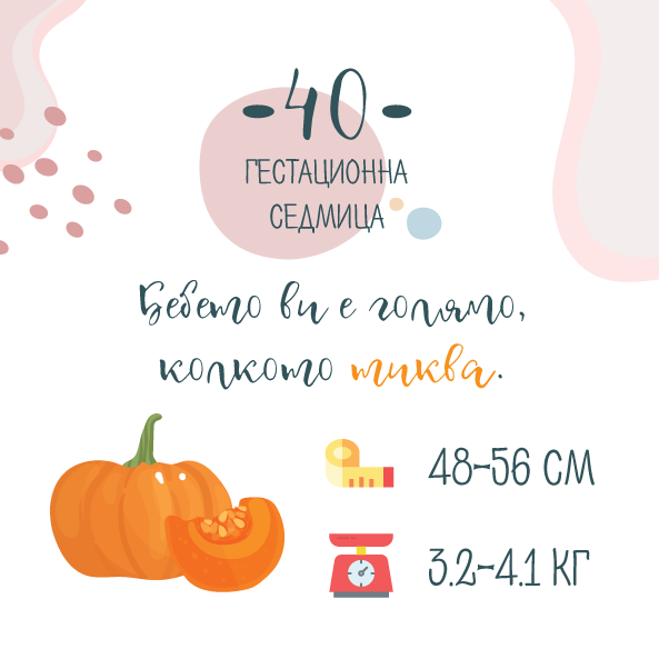 40 гестационна седмица от бременността