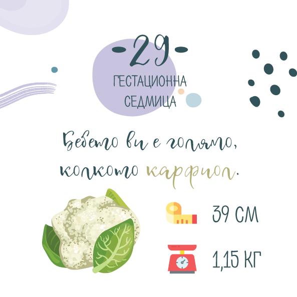 29 гестационна седмица от бременността