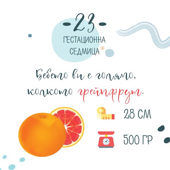 23 гестационна седмица от бременността