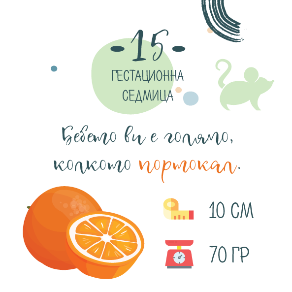 15 гестационна седмица от бременността